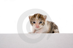 Striped Kitten On A White Box Stock Image - Image: 2954261