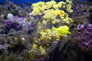 Yellow Fish Stock Images - Image: 2967984