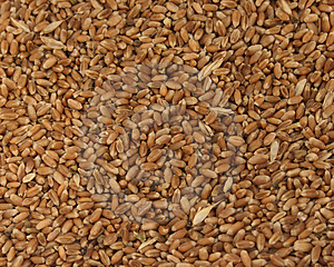 Grain Stock Photos - Image: 2975783