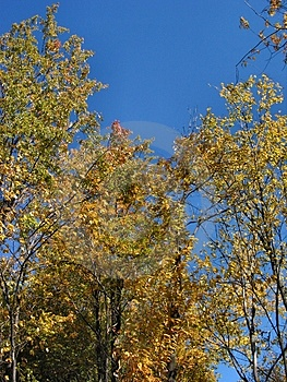 Autumn In Michigan – 04_10_2_001 Royalty Free Stock Image - Image: 30086