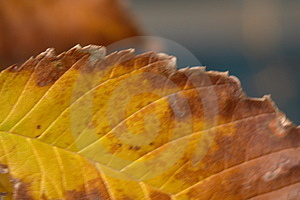 Herbstblatt Verfallen Lizenzfreie Stockfotografie