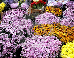 Bunches Of Flowers Stock Photos - Image: 30743