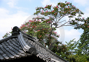 Roof Tree And Sky Royalty Free Stock Photo - Image: 30835