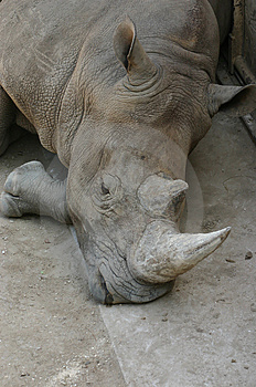 Rhino Stock Image - Image: 32471