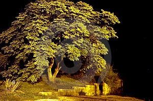 Tree Exposure Royalty Free Stock Photos - Image: 32948
