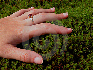Woman Hand And Moss Royalty Free Stock Photography - Image: 33067