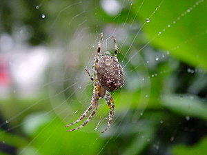 Spider Royalty Free Stock Photo - Image: 34045