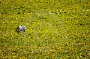 Horse In Meadow Stock Photography