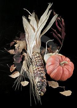 Fall Harvest Free Stock Photos