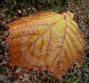 Autumn's Last Leaf Free Stock Photography