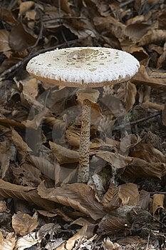 蘑菇II 免版税图库摄影