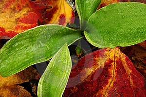 Plant & Leaves Royalty Free Stock Photo - Image: 37835