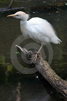 Water Bird Stock Photography