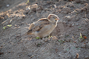 Sparrow Stock Photo - Image: 307870