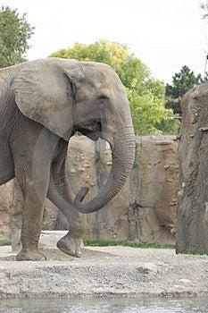 Elephant Walking Stock Image - Image: 309401