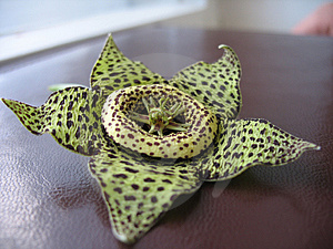 Exotic  Flower Royalty Free Stock Image - Image: 3010116