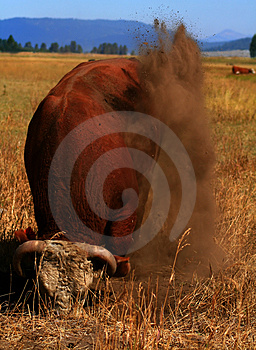 Bull Market 7 Stock Images - Image: 3028564