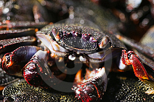 Cooked Crab Stock Images - Image: 3032654
