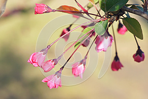 Flower Buds Royalty Free Stock Photography - Image: 30371217