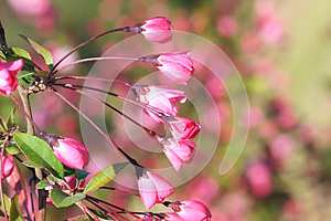 Flower Buds Royalty Free Stock Photography - Image: 30371297
