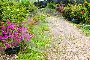 Garden Path Royalty Free Stock Photos - Image: 30399438