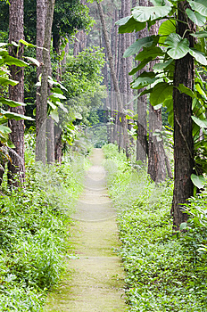 Garden Path Royalty Free Stock Image - Image: 30399796