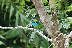 Colorful Tropical Bird Royalty Free Stock Photography - Image: 3049047