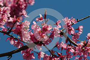Tree Flowers Royalty Free Stock Image - Image: 30517706