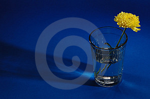 Flower In Thick Glass Royalty Free Stock Photo - Image: 3064235