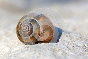 Snail Stock Photography - Image: 30614972