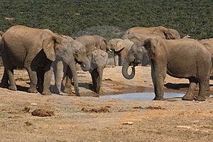 Elephants Gathering Royalty Free Stock Photography - Image: 3075397