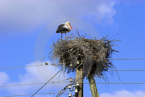 White Stork In Nest Royalty Free Stock Photo - Image: 3080975