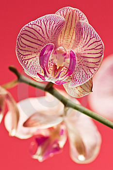 Pink Orchid Stock Photos - Image: 3086433