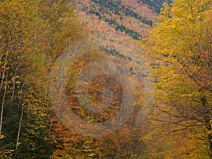 Fall Colors In Crawford Notch Stock Image - Image: 318671