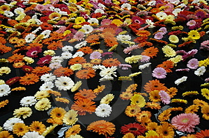 Stock Images - Floating Gerberas
