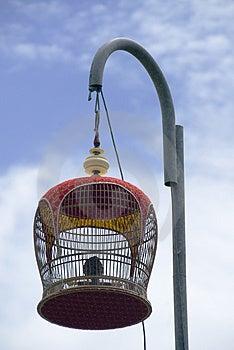 Zangvogel Royalty-vrije Stock Afbeeldingen - Afbeelding: 3122839