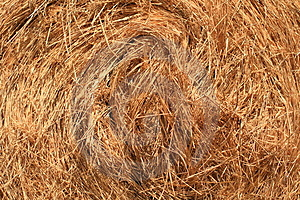 Detailed View Of Hay Stock Images - Image: 3133924