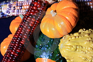 Vivid Harvest Colors Stock Image - Image: 3134371