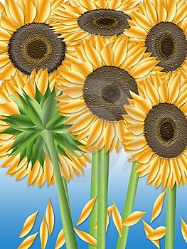 Sunflowers Stock Photography - Image: 3136712