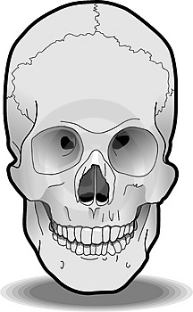 Human Skull Stock Photos - Image: 3165203