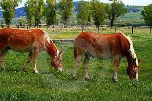 Government Horses  Royalty Free Stock Photos - Image: 3173148