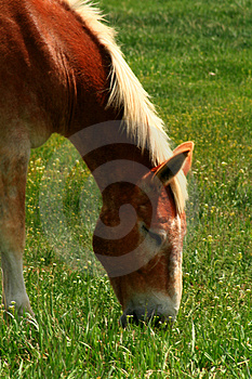 Government Horses  Stock Photography - Image: 3173302