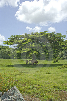 Horses And Tree Royalty Free Stock Image - Image: 3177506