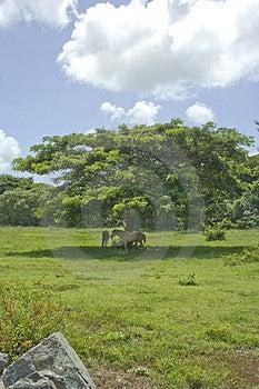 Caballos Y árbol Imagen de archivo libre de regalías - Imagen: 3177506