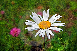 Textured Daisy Stock Images - Image: 3181624