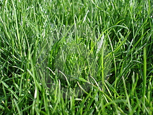 Watching Grass Grow Royalty Free Stock Photos - Image: 3189718
