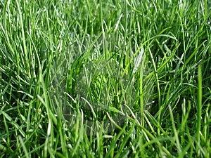Watching Grass Grow Royalty Free Stock Photos - Image: 3189718