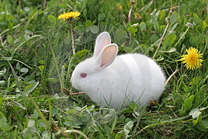 White Easter rabbit Stock Photos