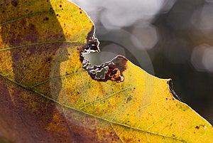 Leaf Bite Stock Photos - Image: 3194363