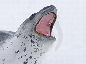 Predator Stock Photography - Image: 320952